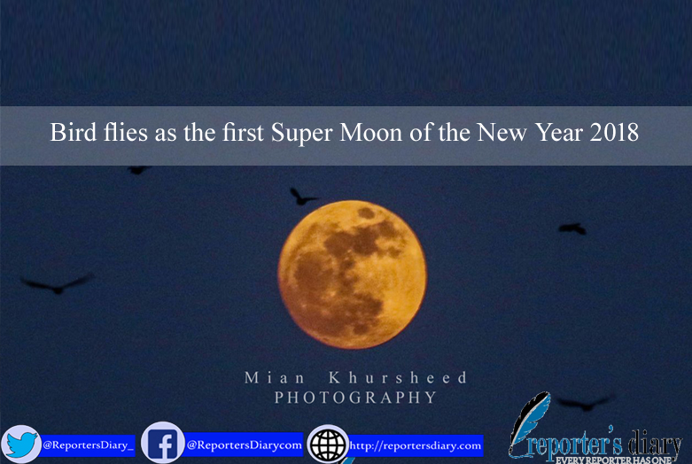 Bird flies as the first Super Moon of the New Year 2018
