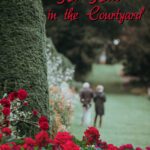 Red Roses in the Courtyard by Tahir Mehmood